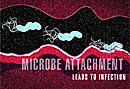 microbe infection